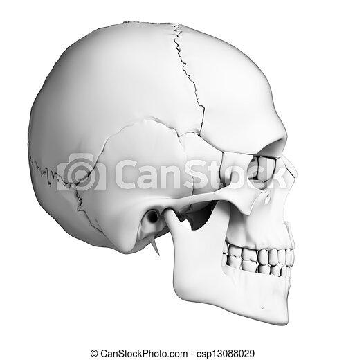 Human skull anatomy - csp13088029