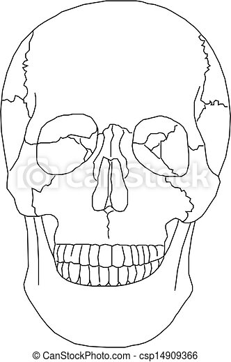 Human Skull  - csp14909366