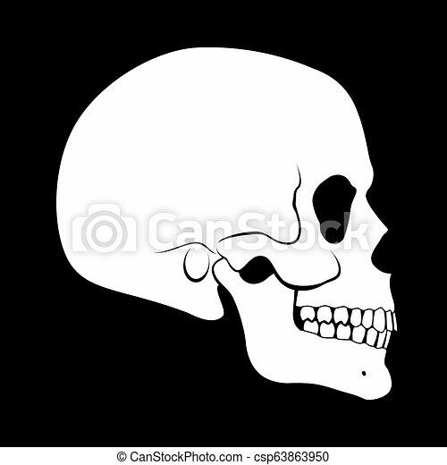 Skull Model Back