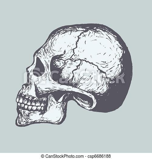 Human Skull - csp6686188