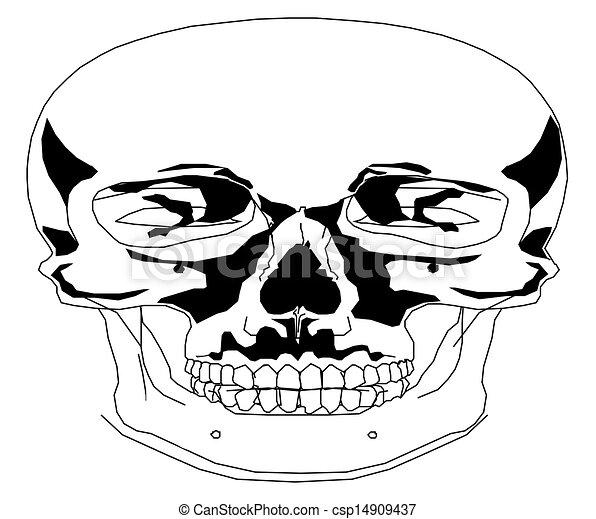 Human skull - csp14909437