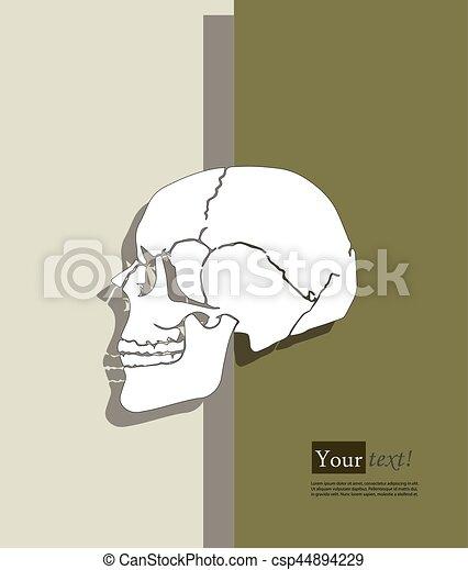 Human skull - csp44894229