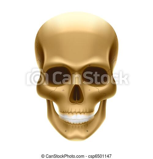 Human skull - csp6501147