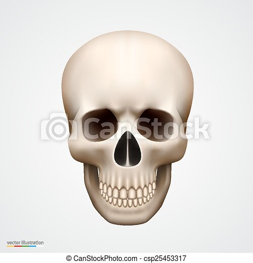 Human skull isolated on white - csp25453317