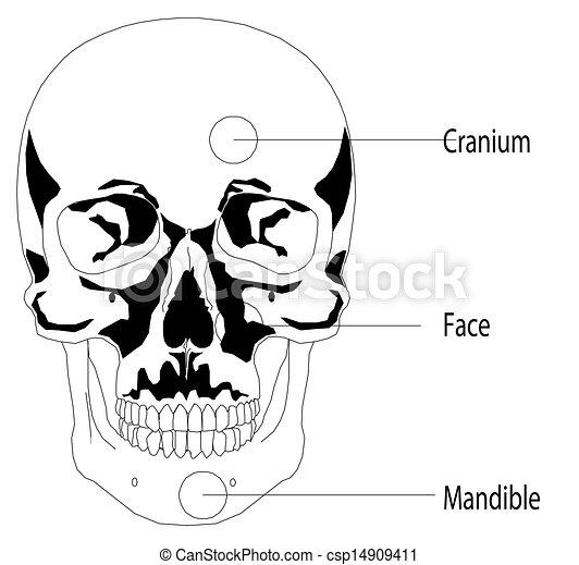 Human skull - csp14909411