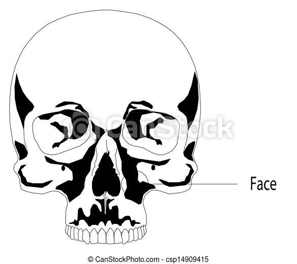 Human skull - csp14909415