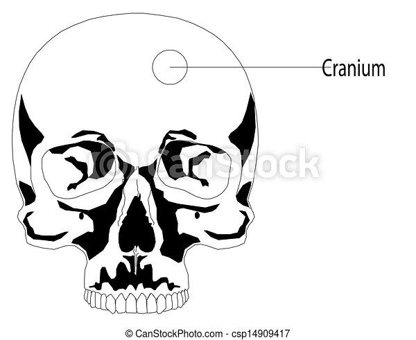 Human skull - csp14909417