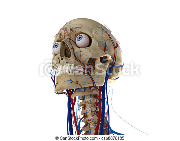 Human skull with eyes, arteries and veins - csp8876185