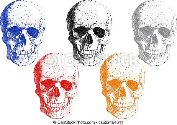 Human skulls, vector set - csp22464641