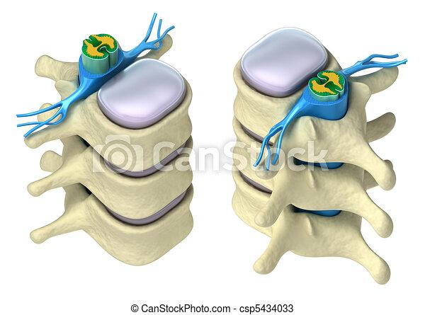 Human spine in details - csp5434033