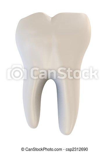 human tooth - csp2312690