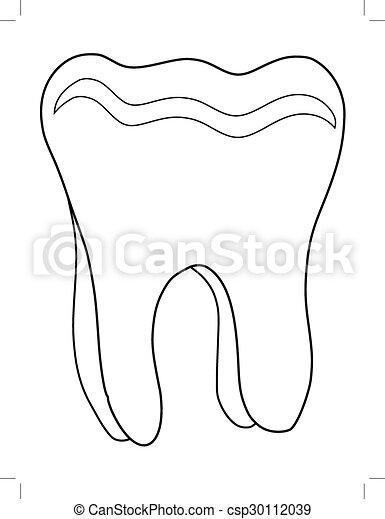human tooth - csp30112039