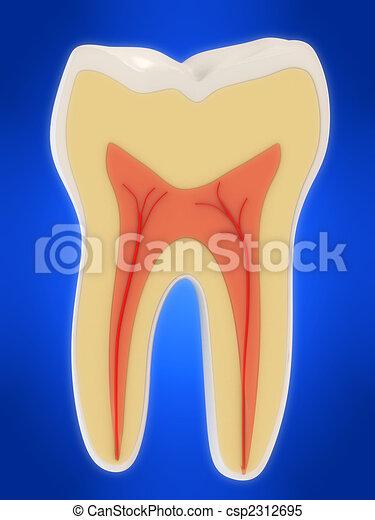 human tooth - csp2312695