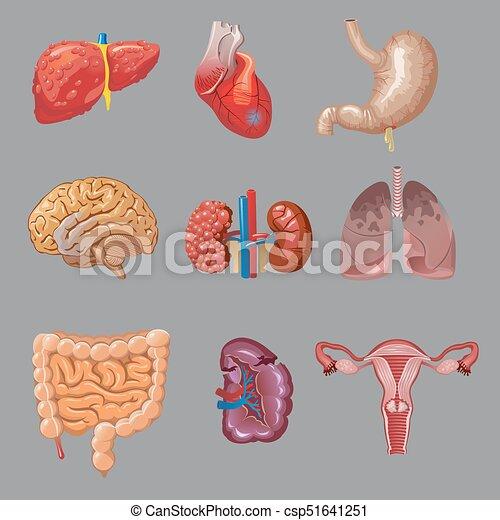 Humano, órganos internos, caricatura, colección. Cuerpo, gris ...