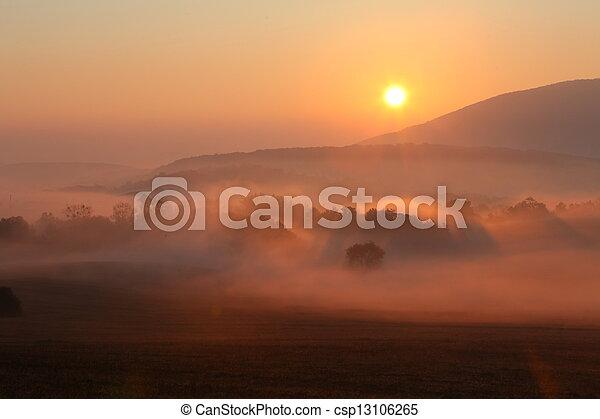 humide, arbres, brouillard, mouillé, forêt, soleil, brume - csp13106265