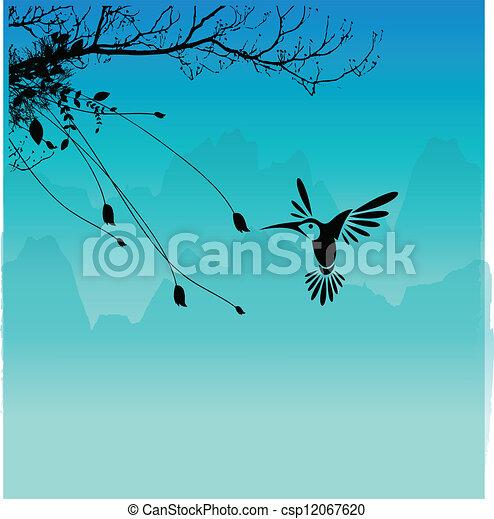 humming bird  - csp12067620
