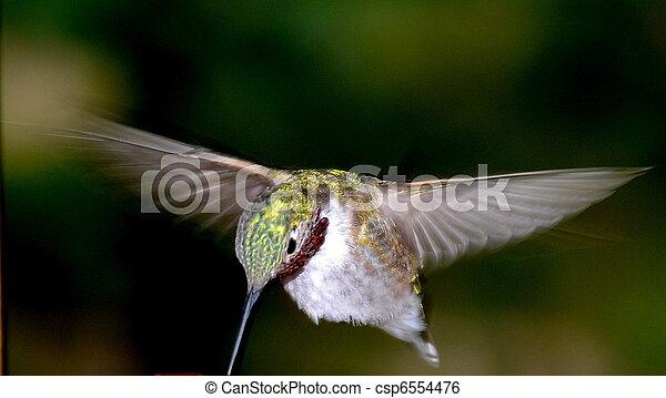 Humming Bird - csp6554476