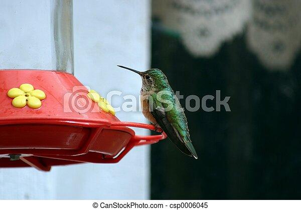 Hummingbird 1542 - csp0006045
