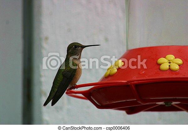 Hummingbird 1553 - csp0006406