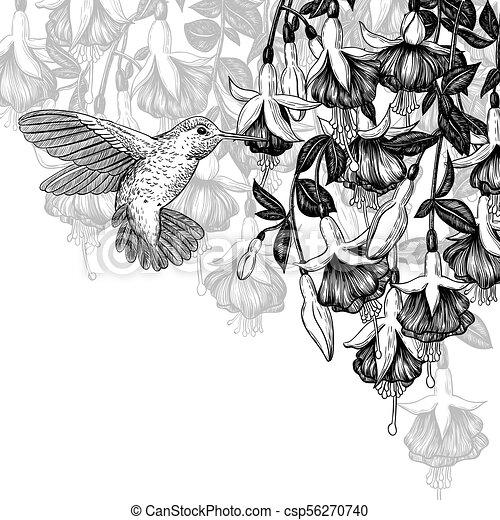 Hummingbird and fuchsia - csp56270740