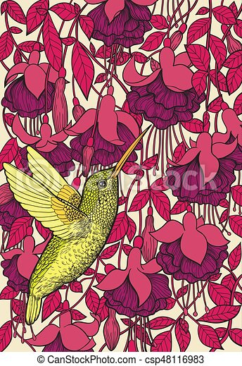 Hummingbird and fuchsia flowers - csp48116983