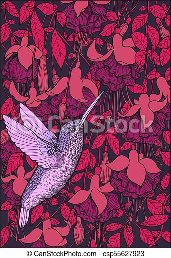 Hummingbird and fuchsia flowers - csp55627923