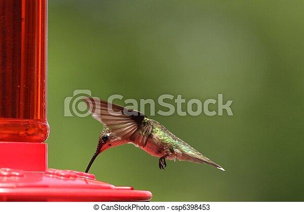 Hummingbird feeding 2 - csp6398453