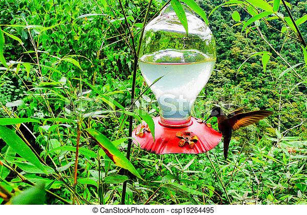 Hummingbird feeding - csp19264495