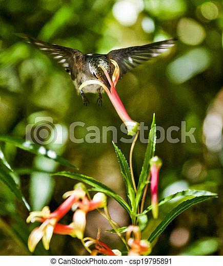 Hummingbird Feeding - csp19795891