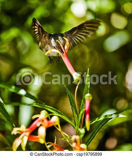 Hummingbird Feeding - csp19795899