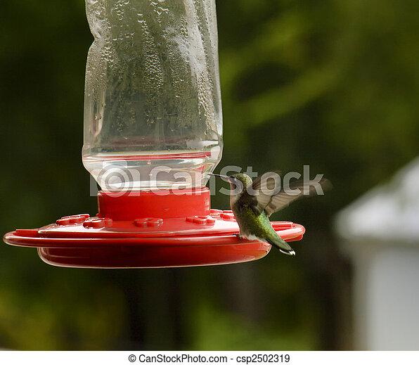 Hummingbird Feeding - csp2502319