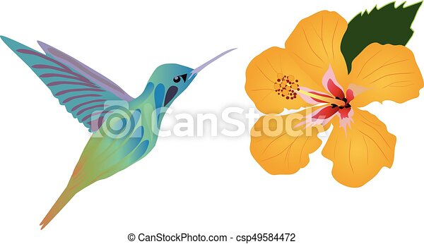 vector hummingbird flower vectors illustration search clipart