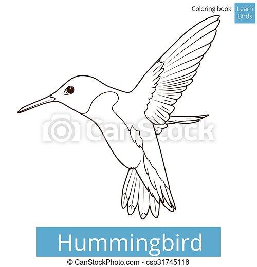 Hummingbird learn birds coloring book vector - csp31745118