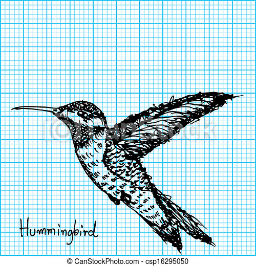 hummingbird sketch on graph paper image of hummingbird sketch