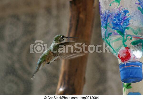 Hummingbird - csp0012004