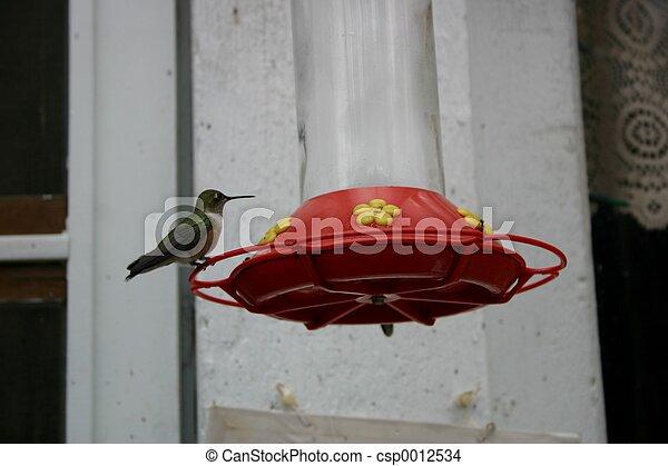 Hummingbird - csp0012534
