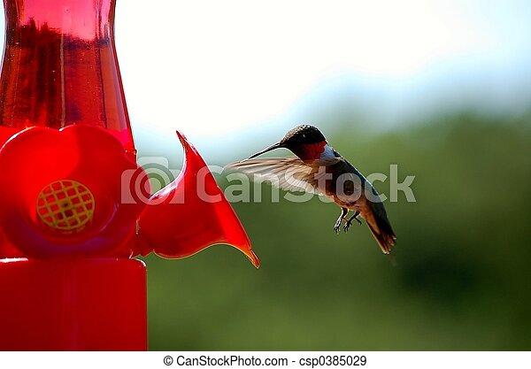 Hummingbird - csp0385029