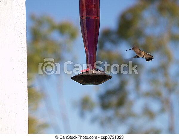 Hummingbird - csp8731023