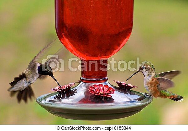 Hummingbirds at feeder - csp10183344