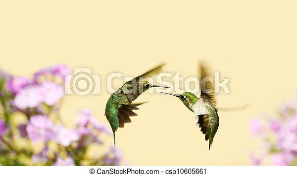 Hummingbirds fighting. - csp10605661