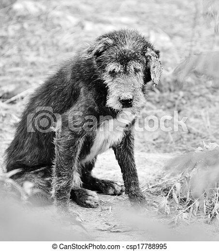 hund, abkommen, abirren, sich entfernen, richtung ändern, sich unterscheiden - csp17788995