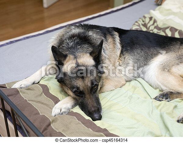 Hund Bett