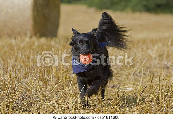 hund - csp1611608