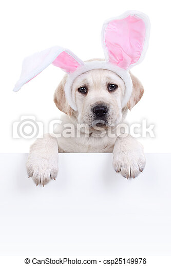 hund, osterhase, zeichen - csp25149976
