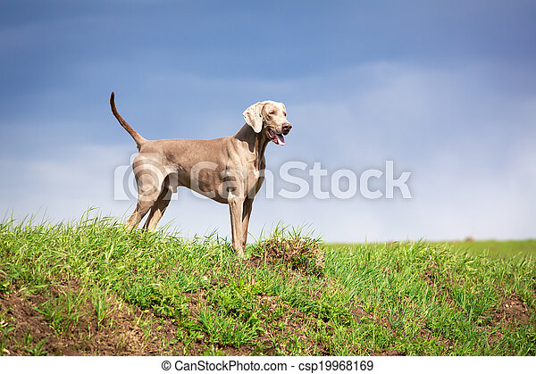 hund - csp19968169