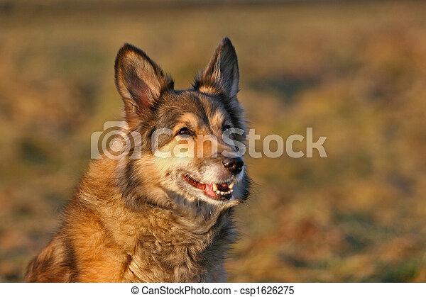 hund - csp1626275