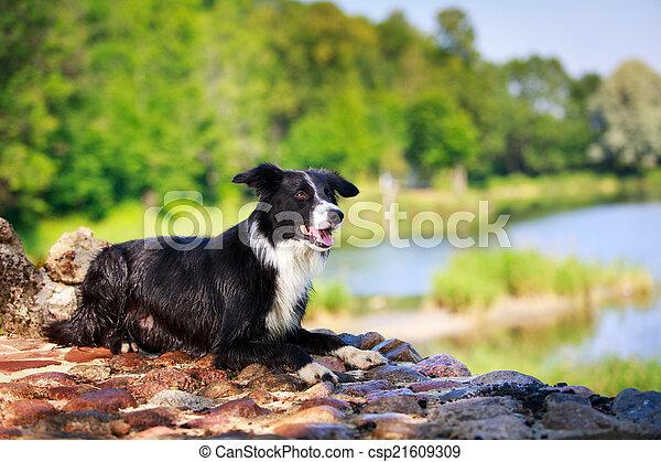 Hund - csp21609309