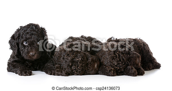 hundebabys, abfall - csp24136073