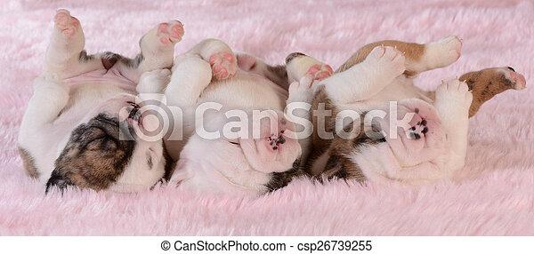 hundebabys, abfall - csp26739255