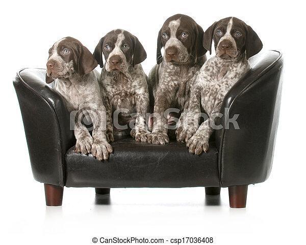 hundebabys, abfall - csp17036408